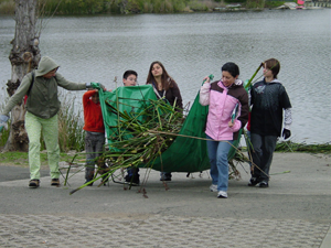 Volunteers remove tules at Lake Chabot before the Youth Fishing Derby.