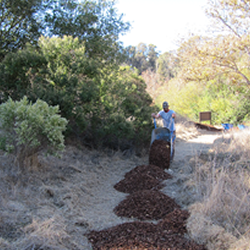 Building a bark trail in the native grass meadow.