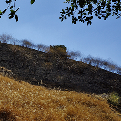 Help us plant this burned hillside in Hanns Park!