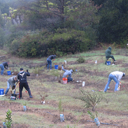 Volunteers plant native trees in Hanns Park.